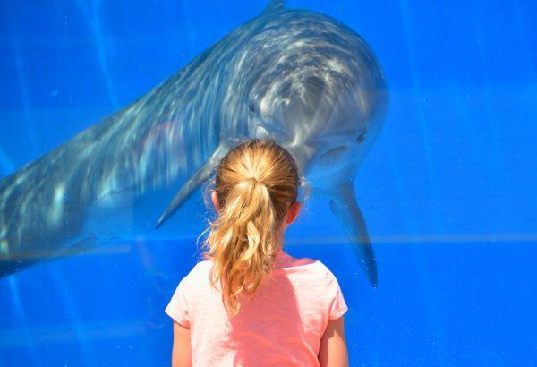【ロシア最大】ウラジオストクのおすすめ水族館について紹介します!